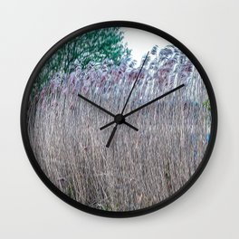 Cane thicket in the Ticino river natural park during winter before sunset Wall Clock