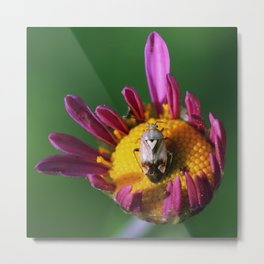heart beetle Metal Print