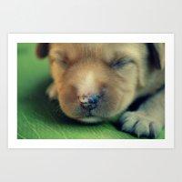 puppy Art Prints featuring Puppy by Luiza Lazar