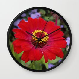 Red zinnia - blazing ring of fire Wall Clock