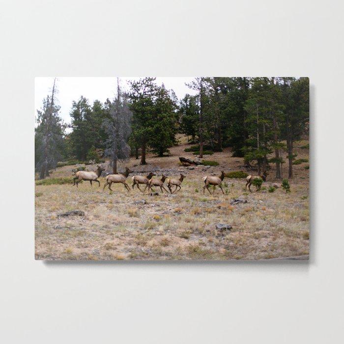 Colorado, wildlife Metal Print