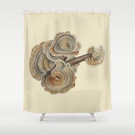 Polyporus versicolor Shower Curtain