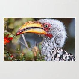 Yellow-billed hornbill, South Africa Rug
