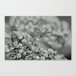 The March hare and the dragonfly b/w Canvas Print