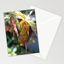 Lady Slipper Orchid II Stationery Cards