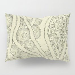 Vintage Cell Biology Pillow Sham