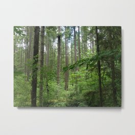 Maple Valley, Washington Metal Print
