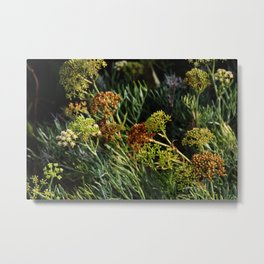flowering wild plants Metal Print