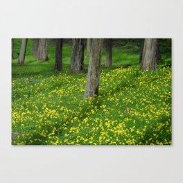 Wild Yellow Oxalis Flowers Canvas Print