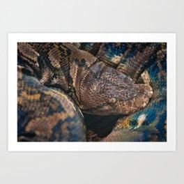 Colorful Snake Art Print