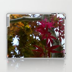 Japanese Maple Tree Laptop & iPad Skin