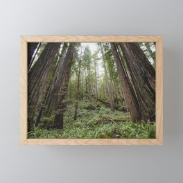 Fern Alley - Redwood Forest Nature Photography Framed Mini Art Print
