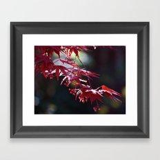 Acer Framed Art Print