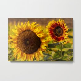 Sunflower Friends at Dusk by Reay of Light Metal Print