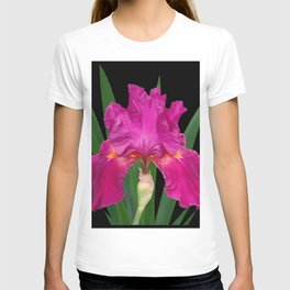 Iris 'Picante' on black T-shirt
