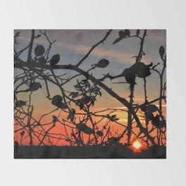 Rose hip in sunrise Throw Blanket