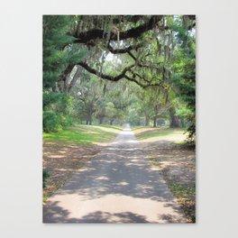 Live Oak Alley Canvas Print