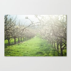 Sunlight in the Orchard Canvas Print