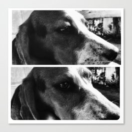 Beagle Boys Canvas Print