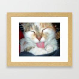 My cat. Framed Art Print
