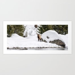 Elk in Winter Art Print