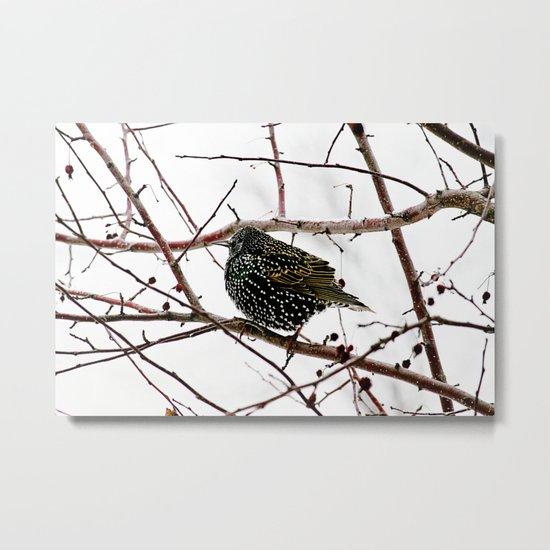 oh starling Metal Print