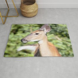 Watercolor Deer, Eastern Whitetail 02, Cape Breton, Canada, A Curious Look Rug
