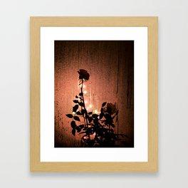 Rose Silhouette  Framed Art Print