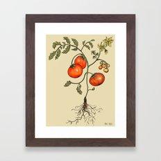 Tomato Botanical Framed Art Print