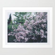 Korean Lilac Instant Film Soft Abstract Floral Feminine Wall Art Art Print