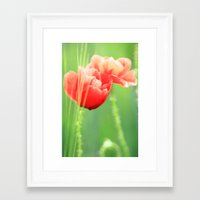 poppy Framed Art Prints featuring Poppy by Falko Follert Art-FF77