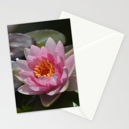 Water Lily with crimpy petals Stationery Cards