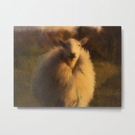 A SHEEP WITH NO NAME Metal Print