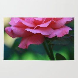 Beautiful Pink Rose with Colorful Background Rug