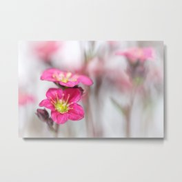 Sweet as candy... Metal Print