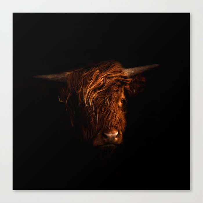Highland Beauty Canvas Print
