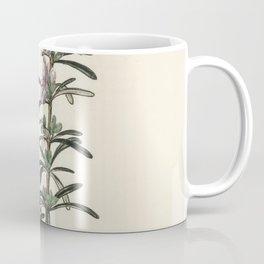 Rosemary (Rosmarinus) officinalis  from Medical Botany (1836) by John Stephenson and James Morss Chu Coffee Mug