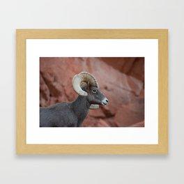 Desert Bighorn, Valley of Fire - II Framed Art Print