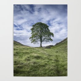 Return to Sycamore Gap Poster
