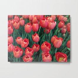 Tulips at the Bellagio Metal Print