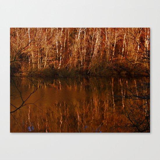 Silver Birch, Golden Light Canvas Print