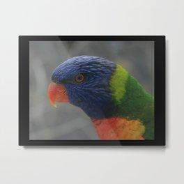 Wild Rainbow Lorikeet DPG150627a Metal Print