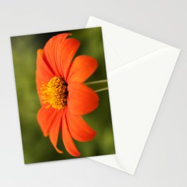 Mexican Sunflower in Bloom Stationery Cards