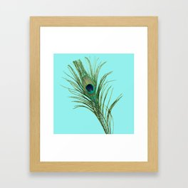 Peacock Feather on Blue Background Framed Art Print