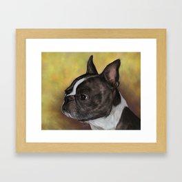 Boston Terrier Painting Portrait Framed Art Print