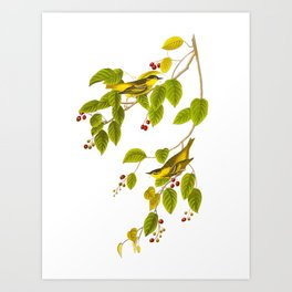 Carbonated Warbler John James Audubon Vintage Scientific Illustration Art Print
