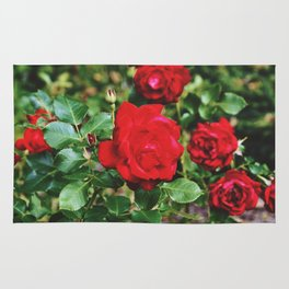 Red roses by Giada Ciotola Rug