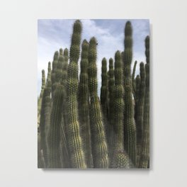 Cacti so High Metal Print