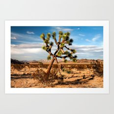 Desert Beauty Art Print