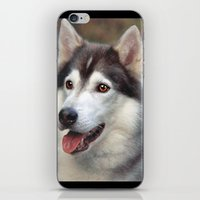 husky iPhone & iPod Skins featuring Husky by Doug McRae